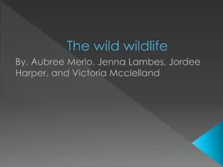 The wild wildlife