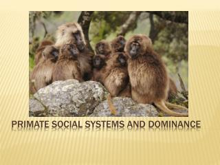 Primate social systems and dominance