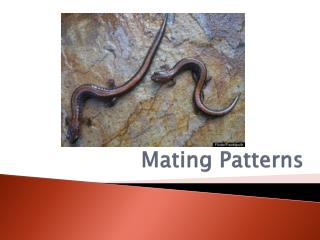 Mating Patterns