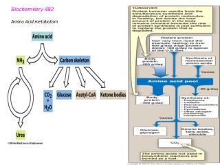 Biochemistry 482  Amino Acid metabolism
