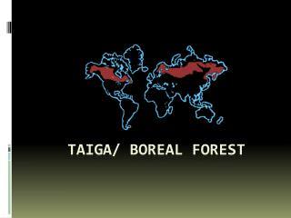 Taiga/ boreal forest