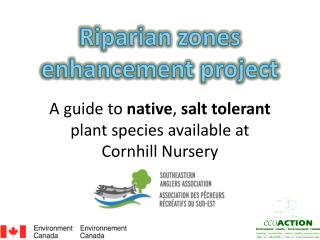 A guide to  native ,  salt tolerant  plant species available at Cornhill Nursery
