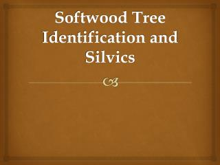 Softwood Tree Identification and  Silvics