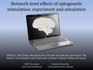 Network-level  e ffects  of  optogenetic  s timulation :  experiment  and  simulation