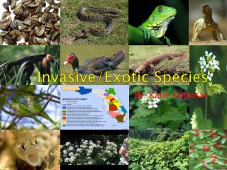 Invasive/Exotic Species