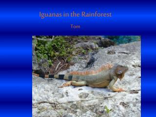 Iguanas in the Rainforest