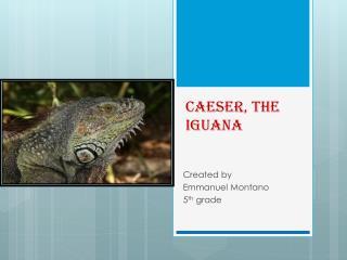 Caeser , the iguana