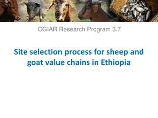 Site selection process for sheep and goat value chains in Ethiopia