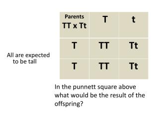 In the  punnett  square above what would be the result of the offspring?