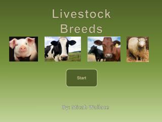 Livestock Breeds