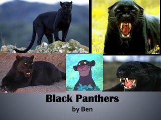 Black Panthers  b y Ben