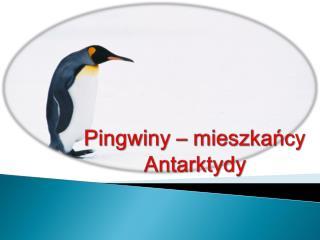 Pingwiny – mieszkańcy Antarktydy