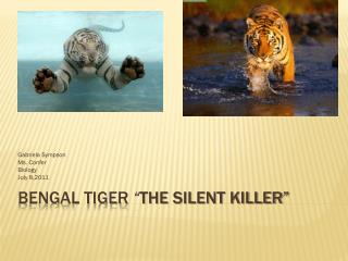 "Bengal Tiger  "" The silent killer"""