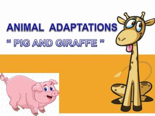 """  PIG AND GIRAFFE """