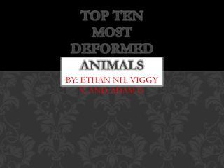 Top Ten  M ost Deformed Animals