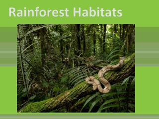 Rainforest Habitats