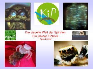 Die visuelle Welt der Spinnen Ein kleiner Einblick Axel Schmid