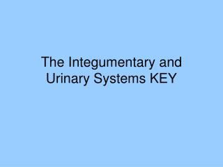 The  Integumentary  and Urinary Systems KEY