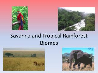 Savanna and Tropical Rainforest Biomes