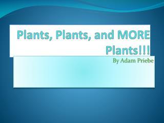 Plants, Plants, and MORE Plants!!!