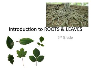 Introduction to ROOTS & LEAVES