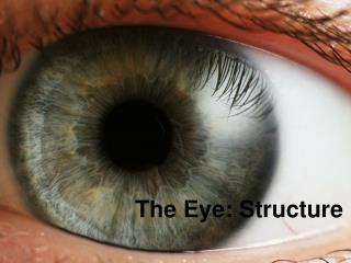 The Eye: Structure