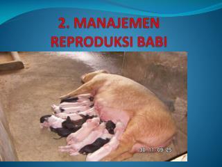2. MANAJEMEN  REPRODUKSI BABI