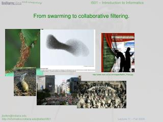 From swarming to collaborative filtering.