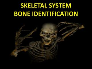 SKELETAL SYSTEM BONE Identification