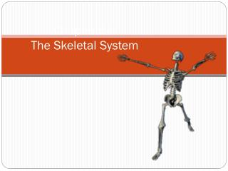 Chapter 5e: The Skeletal System