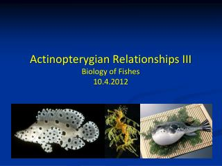 Actinopterygian  Relationships  III Biology of Fishes 10.4.2012