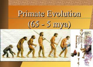 Primate Evolution (65 - 5 mya)