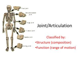 Joint/Articulation