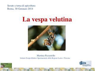 Serate a tema di apicoltura Roma, 30 Gennaio 2014