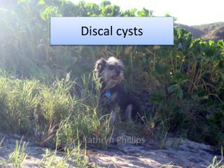 Discal cysts