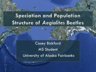 Speciation and Population Structure of  Aegialites  Beetles