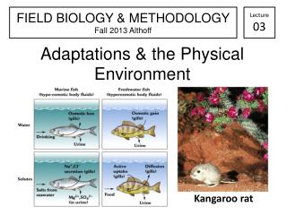 Adaptations & the Physical Environment