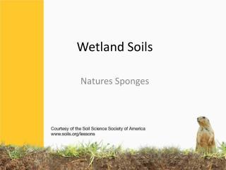 Wetland Soils