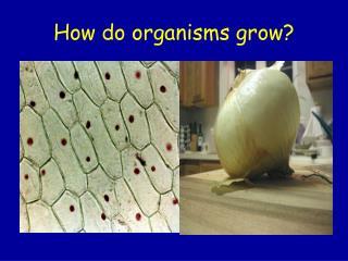 How do organisms grow?