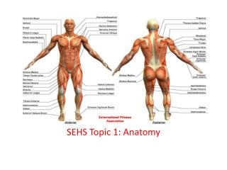 SEHS Topic 1: Anatomy