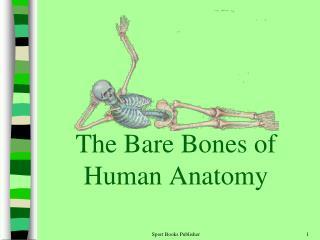 The Bare Bones of Human Anatomy