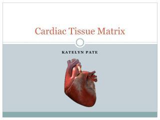 Cardiac Tissue Matrix