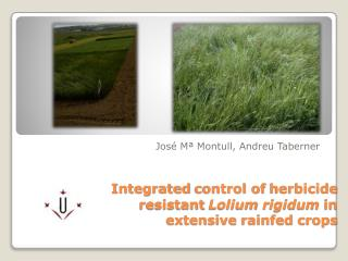 Integrated  control of  herbicide resistant Lolium rigidum in  extensive rainfed crops
