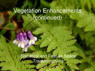 Vegetation Enhancements (continued)