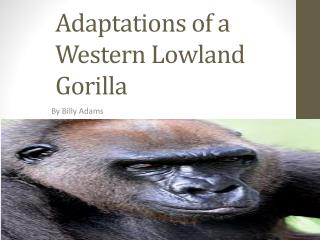 Adaptations of a Western Lowland Gorilla