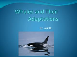 Whales and Their Adaptations