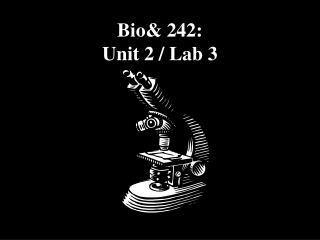 Bio& 242:  Unit 2 / Lab 3