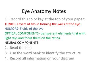 Eye Anatomy Notes