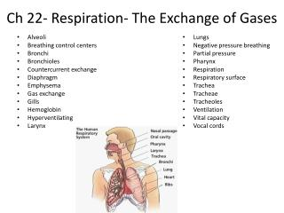 Ch 22- Respiration- The Exchange of Gases