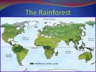 The Rainforest